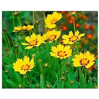 Flower Seeds : Tickseed Flower Seeds Perennial Flower Seeds For Beds (18 Packets) Garden Plant Seeds By Creative Farmer