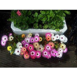 Flower Seeds : Buck Bay Plant Garden Farm (20 Packets) Garden Plant Seeds By Creative Farmer