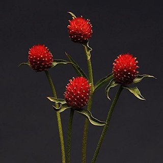 Flower Seeds : Gomphrena For Borders Red Mix Flower Seed Packets Seeds Flowers Garden Home Garden Seeds Eco Pack Plant Seeds By Creative Farmer