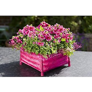 Flower Seeds : Schizanthus Mixed Bucket Mix Garden Seeds Of Flowers Flower Seeds For Garden Garden Home Garden Seeds Eco Pack Plant Seeds By Creative Farmer