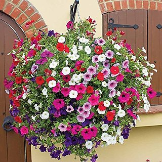 Flower Seeds : Petunia Hanging Mix Seed For Kitchen/Terrace/Poly House Garden Garden Home Garden Seeds Eco Pack Plant Seeds By Creative Farmer
