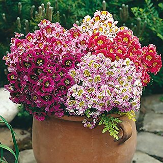 Flower Seeds : Butterfly Flower Seeds Garden Seeds Home Depot Garden Home Garden Seeds Eco Pack Plant Seeds By Creative Farmer