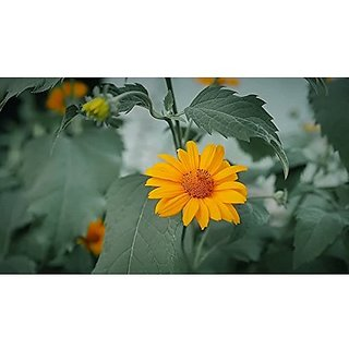 Flower Seeds : Genda Pot Marigold Orange Seed Packets Seasonal Flowering Plants Garden Home Garden Seeds Eco Pack Plant Seeds By Creative Farmer