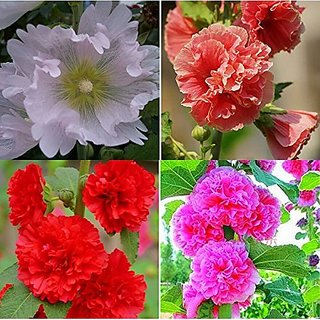 Flower Seeds : Gulkhaira Farm Seeds Garden Home Garden Seeds Eco Pack Plant Seeds By Creative Farmer