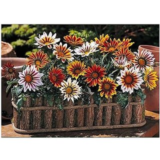 Flower Seeds : Ornamental Flower Gazania Mix Flower Seeds For Containers Garden Home Garden Seeds Eco Pack Plant Seeds By Creative Farmer