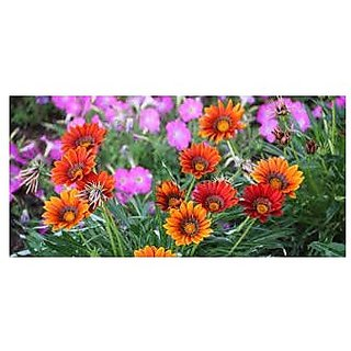 Flower Seeds : Gazania-Dwarf Mixed Flower Seed Packets Garden Seeds Garden Home Garden Seeds Eco Pack Plant Seeds By Creative Farmer
