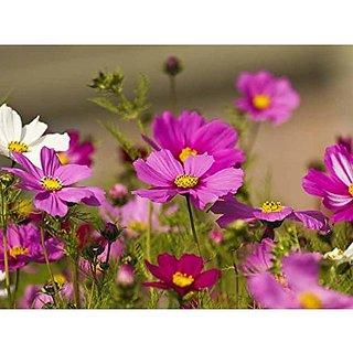 Flower Seeds : Flowering Plants Cosmos Gardening Seeds Garden Home Garden Seeds Eco Pack Plant Seeds By Creative Farmer