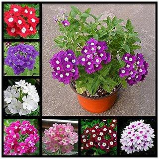 Buy Flower Seeds Simplers Joy Mix Flower Seeds Packets Flowering