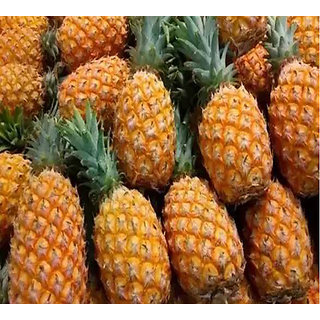 Futaba Dwarf pineapple seeds - 100 Pcs