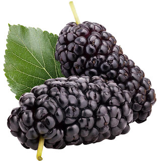 Futaba Dark Black Mulberry Seeds - 50 Pcs