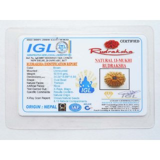 13 Mukhi Rudraksha Nepal IGL Certified 24 24mm 2 51gms Thirteen Face  Rudraksh