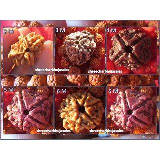 Combo Lot Of Rudraksha 2 Mukhi 3 Mukhi 4 Mukhi 5 Mukhi 6 Mukhi , Each Mukhi 1 piece in this lot