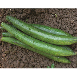 Sponge Gourd Dark Green Loofah Seeds, Peechinga, Pirkanga Tori 20 Seeds by AllThatGrows