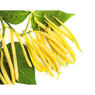 Yellow Beans Seeds, French Beans, Pencil Beans, String Beans, Snap Beans Vegetable Seeds - 20 Seeds by AllThatGrows