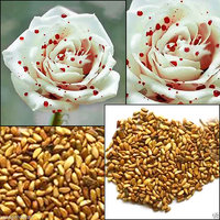 White Drop of Blood Rose seeds, magical flowers Imported Seeds 12 Fresh Seeds