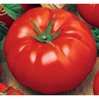 Tomato Seeds Kremlin chimes Ukraine Heirloom Vegetable Seeds /  30 Seeds