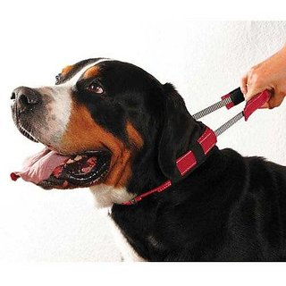 ubspetshop.com Imported Integrated Leash for Dogs Large