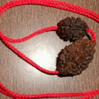 KESAR ZEMS 2 And 3 Mukhi Rudraksha Combination 100 Original Rudraksha By J F.