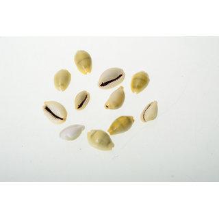 Set of 21 Natural Yellow Kawdi / Kaudi / Kowdi / Cowrie / Peeli Koudi Shells