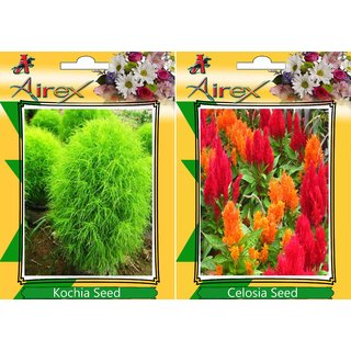 Flower Seeds By Airex Tithonia, Sungold and Red Amaranthus (Summer) Flower Seed (Pack Of 25 Seed * 3 Per Packet)