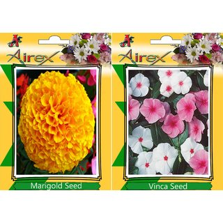 Flower Seed By Airex Balsam Rose Gulab (Summer) Flower Seed (1 Packet Of Balsam Rose Gulab) Pack Of AVG 50 - 100 Seed * 1 Per Packet Seed