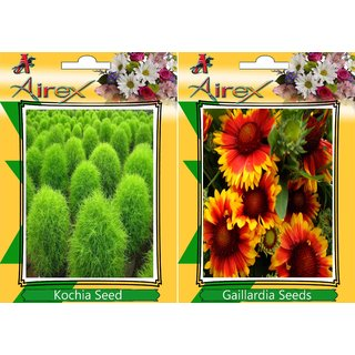 Airex Kochia and Gaillardia  (Summer) Flower Seed (Pack Of 50  Seed * 2 Per Packet)