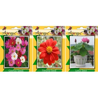 Airex Cosmos Mixed and Balsam (Summer) Flower Seed (Pack Of 50  Seed * 2 Per Packet)