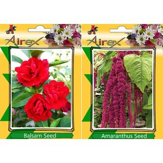 Airex Balsam and Red Amaranthus (Summer) Flower Seed (Pack Of 50  Seed * 2 Per Packet)