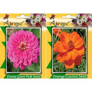 Flower Seeds By Airex Zinnia Giant Pink and Orange Cosmos (Summer) Flower Seed (Pack of 25 Seed * 2 Per Packet)