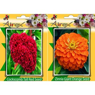 Flower Seeds By Airex Cockscomb Tall Red and Orange Gaint Zinnia (Summer) Flower Seed (Pack of 50 Seed * 2 Per Packet)