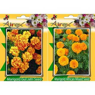 Flower Seeds By Airex Marigold Gul Jafri and Marigold African Mixed (Summer) Flower Seed (Pack of 25 Seed  2 Per Packet)