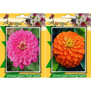Flower Seeds By Airex Zinnia Giant Pink and Orange Gaint Zinnia (Summer) Flower Seed (Pack of 50 Seed * 2 Per Packet)