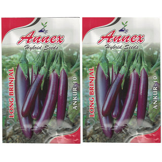 Annex Egg Plant Vegetable Seeds Pack Of 2
