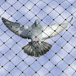Bird Protection Net or Anti Bird Net  Protection from Pigeon  Birds size10x8'