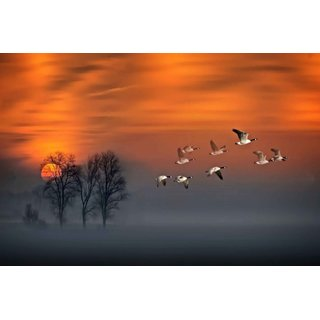 Avikalp Exclusive AZOHP2631 Flight Sunset Geese In Flight Fog Wood Red Sky Full HD Poster Latest Best New 3D Look Beautiful