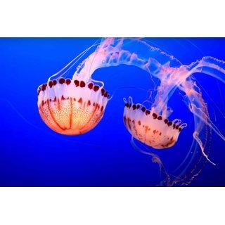 Avikalp Exclusive AZOHP2739 Jellyfish Sea Underwater Fish Blue Ocean Full HD Poster Latest Best New 3D Look Beautiful