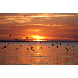 Buy Avikalp Exclusive Azohp5238 Birds Flying At Sunset Nature Full