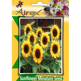 Sunflower Minature Summer Flower Seed (Pack Of 25 Seed Per Packet)