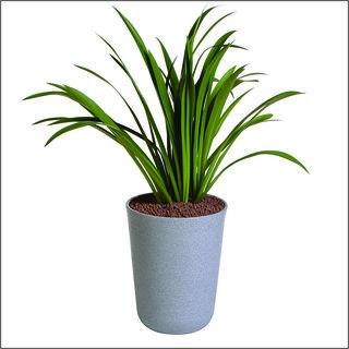 Sereno Bello Plastic Flower Pot Round Planter (13 x 20)  in Light Grey Stone Finish (Home Decor Planters)