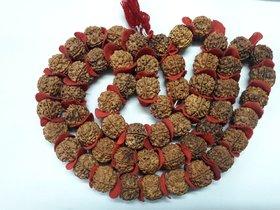 ENERGIZED Big Size Five 5 Mukhi Face Rudraksha NEPAL Mala Kantha of 55 beads 20-21mm With power mantra shidha done