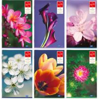 SBLB (Reg Size) Single Line 68p Feminine - Exotic Flower Series