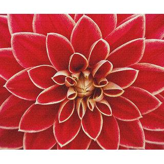 dahlia asteraceae flower canvas poster