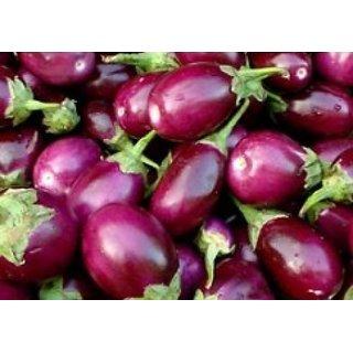 Seeds Little ChuChu Brinjal Quality Vegetables Seeds