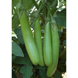 Green Brinjal Quality Vegetables Seeds
