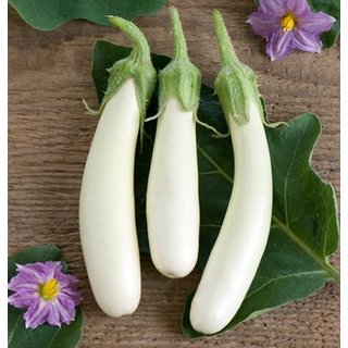 White Little Brinjal High Germination Seeds
