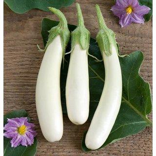 White ChuChu Brinjal Double Quality Seeds For Kitchen Garden