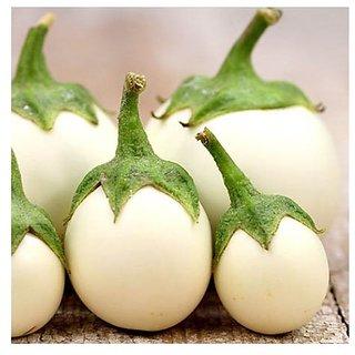 Seeds White Brinjal Fast Germination Seeds For Kitchen Garden