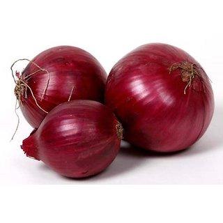 Nasik Red Onion Fast Germination Seeds For Kitchen Garden