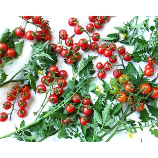 Seeds Hybrid Red Cherry Tomato Seeds for Home Garden