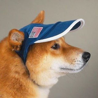 Dog Cap Full size Good for all large breed dogs